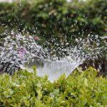 Uporaba kapljičnega namakanja